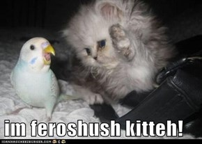 im feroshush kitteh!