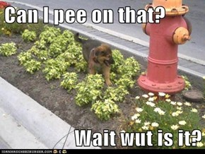Can I pee on that?  Wait wut is it?