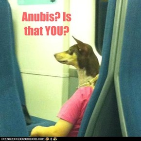 Anubis? Is that YOU?
