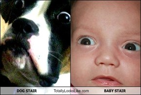 DOG STAIR Totally Looks Like BABY STAIR