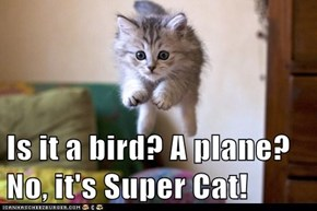 Is it a bird? A plane? No, it's Super Cat!