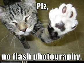 Plz,  no flash photography.