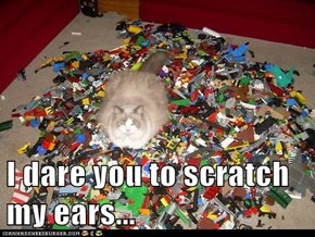 I dare you to scratch my ears...