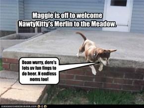 For Merlin