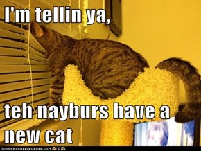 I'm tellin ya,  teh nayburs have a new cat