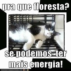 pra que floresta?  se podemos  ter  mais energia!