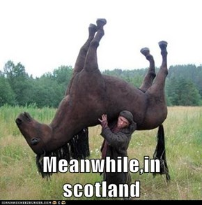 Meanwhile,in scotland