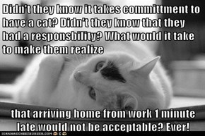 Didn't they know it takes committment to have a cat? Didn't they know that they had a responsbility? What would it take to make them realize  that arriving home from work 1 minute late would not be acceptable? Ever!