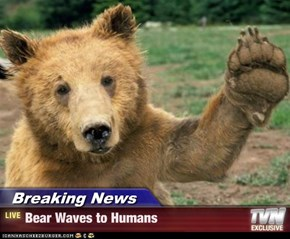 Breaking News - Bear Waves to Humans