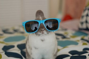 Bunday: Rockin The Shades