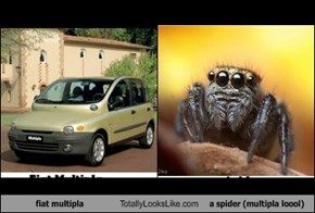 fiat multipla Totally Looks Like a spider (multipla loool)