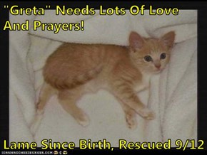 """Greta"" Needs Lots Of Love And Prayers!  Lame Since Birth, Rescued 9/12"
