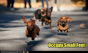 Occupy Small Feet