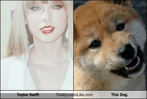 Taylor Swift Totally Looks Like This Dog.