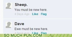 The sheep must be new here.