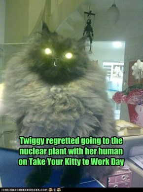Twiggy regretted going to the nuclear plant with her human on Take Your Kitty to Work Day