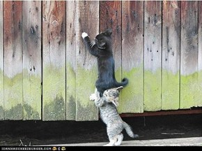 Teamwork, kitteh stylez