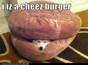 i iz a cheez burger
