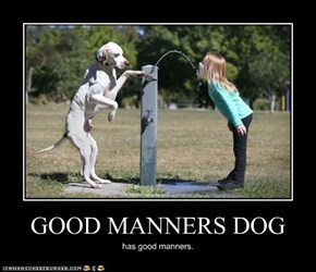 GOOD MANNERS DOG