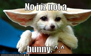 No i iz not a   bunny. ^.^