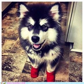 Reader Squee: Kodiak's Socks