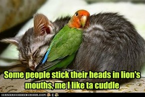 Some people stick their heads in lion's mouths, me I like ta cuddle