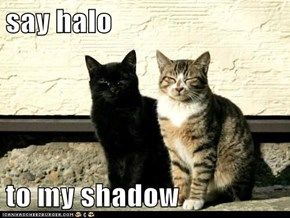 say halo  to my shadow