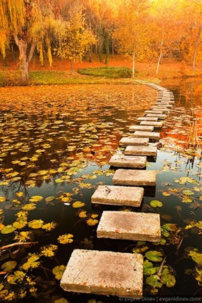 A Hop Skip and Jump Into Fall