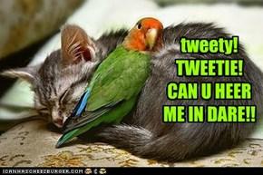 tweety! TWEETIE! CAN U HEER ME IN DARE!!
