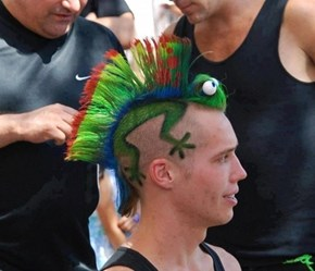 The Crazy Hairdo That Stares Back