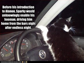 Before his introduction to Alanon, Sparky would unknowingly enable his hooman, driving him home from the bars night after endless night.