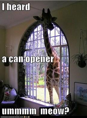 I heard  a can opener ummmm  meow?