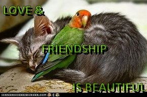 LOVE &  FRIENDSHIP   IS BEAUTIFUL