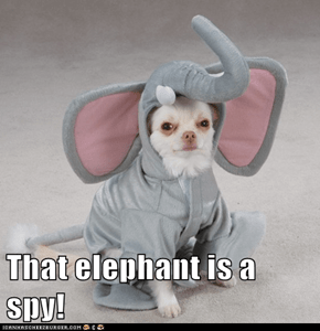 That elephant is a spy!