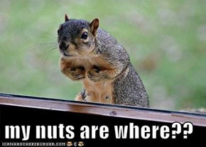 my nuts are where??