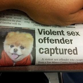 Sex Offender Fail
