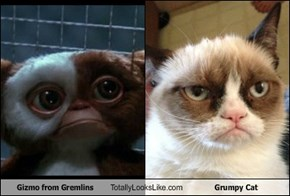 Gizmo from Gremlins Totally Looks Like Grumpy Cat