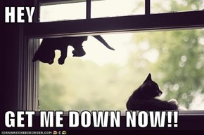 HEY  GET ME DOWN NOW!!