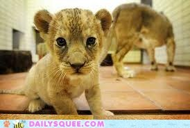 Totally squeelicious baby lion!