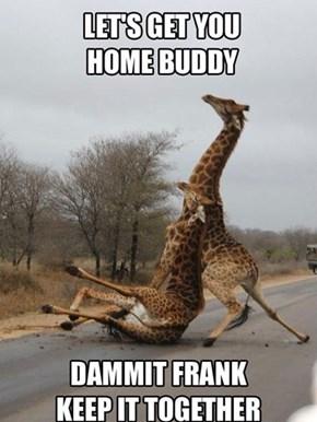 Never Again, Frank