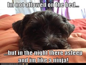Im not allowed on the bed...  ...but in the night there asleep and im like a ninja!