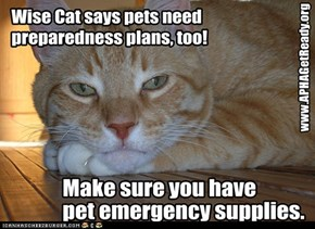 Wise Cat celebrates National Preparedness Month via APHA's Get Ready campaign.