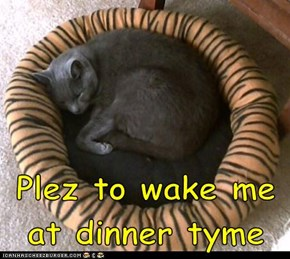 Plez to wake me at dinner tyme
