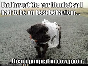 Dad forgot the car blanket so i had to be on best behaviour...  ...then i jumped in cow poop :(