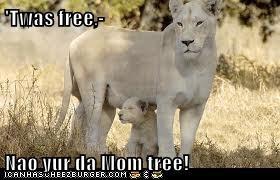 'Twas free,-  Nao yur da Mom tree!