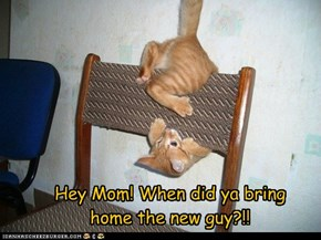 Hey Mom! When did ya bring  home the new guy?!!