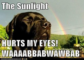 The Sunlight  HURTS MY EYES! WAAAABBABWAWBAB