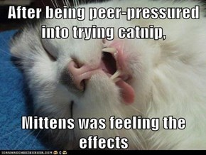 After being peer-pressured into trying catnip,  Mittens was feeling the effects
