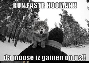 RUN FASTR HOOMAN!!  da moose iz gainen on us!!