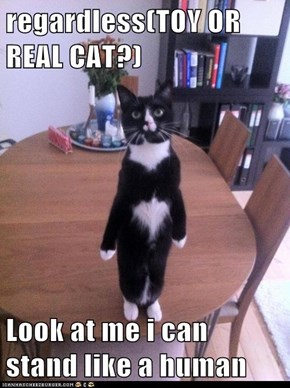 regardless(TOY OR REAL CAT?)  Look at me i can stand like a human
